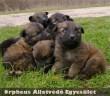 Mind az 5 kölyök gazdára talált az Orpheus Állatvédõ Egyesület munkatársai segítségével