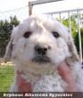 A kis bakksi kutyaszeretõ családhoz került