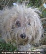 Egy kutyabarát örökbe fogadta Apostolt