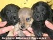 Ez a 3 kiskutya az állatbarátoknak köszönhetõen menekült meg