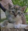 Jós a cica is gazdihoz került!