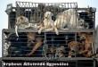 Ilyet is láttunk - kutyagyûjtés - az Orpheus Egyesület sintérprevenciós kutyamentõ programja évek óta töretlen!