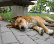 Állatvédelem, állatmentés adó 1% támogatása