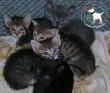Cicamentés - adó 1% támogatás állatvédelemre