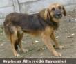 Fero egy állatbarát családhoz került