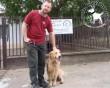 Állatbarátok adó 1 százalékának köszönhetően szertő Gazdihoz került Artúr