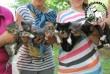 Cicacsokor- macskamentés, megmentettük a cicusokat!