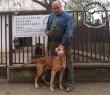 Kutyamentés: Sárga szerető Gazdihoz került!