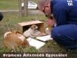 A rendõrségi befogást követõen ezek a kutyusok is új gazdihoz kerültek