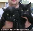 A tíz év feletti, fekete, nõstény macska társával együtt az Orpheus Állatvédõ Egyesülethez került, ahol a sikeres gazdakeresõ program révén, az állatokat egy macskabarát örökbe fogadta