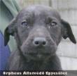 Kutyabarát családhoz került Folti