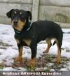 Egy állatszeretõ család fogadta örökbe Fülöpöt