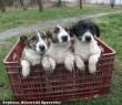 Hideg esõben, az út szélre dobták a kölyök kutyacsaládot - adó 1% felajánlásával segítheti Ön is az állatok megmentését!