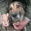 Az Orpheus Állatvédõ Egyesület a telep kutyáit rendszeresen parazitáktól mentesíti
