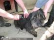 Támogatóinknak köszönhetõen Életmentõ vakcinát kaptak a gazdátlan kutyusok, cicusok (telepen kívülre is jutott bõven)