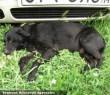 Elütött kutya: megmentettük, felépült! Támogatását hálásan köszönjük!