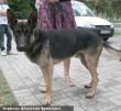 Ramos az Orpheus kutyamentõ programja révén került gazdihoz
