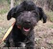 A gazdit keresõ Fidó egy támogató révén az állatkozmetikában szépült meg!