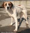 Merész kutyát az Orpheus Állatvédõ Egyesület mentette meg és adta gazdihoz