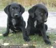 Fonpi és Fongi kutyusok egy gyárteleprõl kerültek az Orpheus Állatvédõ Egyesülethez, majd szeretõ gazdihoz!