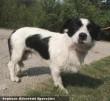 Medi kutyát is az Orpheus Állatvédõ Egyesület csapata mentette meg