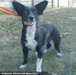 Zsimi a füles kutya az Orpheus révén és a lakosság nagylelkû támogatása által menekült meg