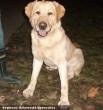 Kutyamentés: Ezel kutyát az Orpheus megmentette, és sikeresen gazdihoz került!