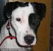 Szefi kutyát az Orpheus Állatvédõ Egyesület támogatói nélkül lehet, hogy nem tudta volna megmenteni