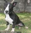 Alek kutya megmentésre került - nagylelkû támogatóink révén nem ment vola ilyen sikeresen