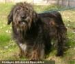 Oddi kutyust az Orpheus Állatvédõ Egyesület mentette meg - a lakosság támogatása nélkül nem sikerült volna!