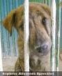 Szabi már egy állatbarát család tagja