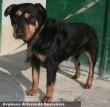 Roci a roti kutya támogatás nélkül nem menekülhetett volna meg