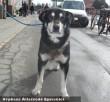 Bazsi kutya bajban volt, de szeretõ gazdihoz került!