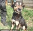Fickó kutya megmentésével új reményt kapott!
