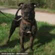 Jockey kutya visszakerülhetett eredeti gazdájához