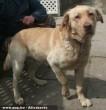 Dekker kutyát az Orpheus Egyesület állatmentõ csapata tette rendbe