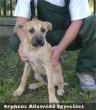 Lili egy állatbarát családhoz került