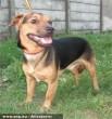 Kutyamentás - az Orpheus Állatvédõ Egyesület révén menekült meg Tombrác kutya