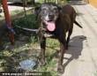 Bandi, az öreg kutyus az Orpheus Állatvédõ Egyesület révén menekült meg