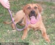 Némó kutya az Orpheus Állatvédõ Egyesület révén menekült meg