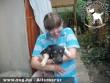 Állatbarátok Szja 1%-nak köszönhetõen Dezsõ szeretõ gazdihoz került