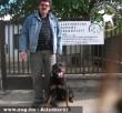 Állatbarátok Szja 1%-nak köszönhetõen Gizi új gazdira talált