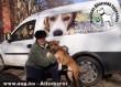 Bubu (Pizzás) az állatbarátok adó 1 százalékának köszönhetõen talált szeretõ gazdára